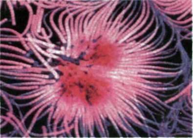 Клітинна та неклітинна форми органічного світу