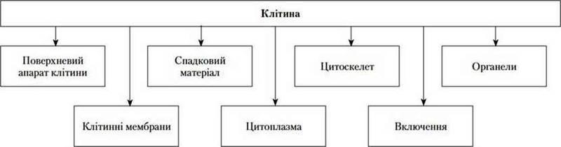 Цитологія   наука про будову і функції клітини   Клітина
