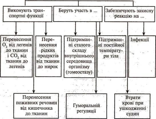 Внутрішнє середовище організму людини. Склад і функції крові