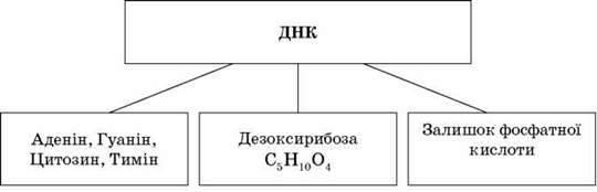 Органічні речовини в живій природі. Рівні структурної організації органічних речовин