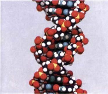 Організація потоку біологічної інформації у клітині