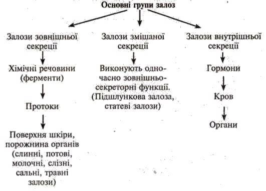 Принципи роботи ендокринної системи. Залози внутрішньої секреції. Гормони