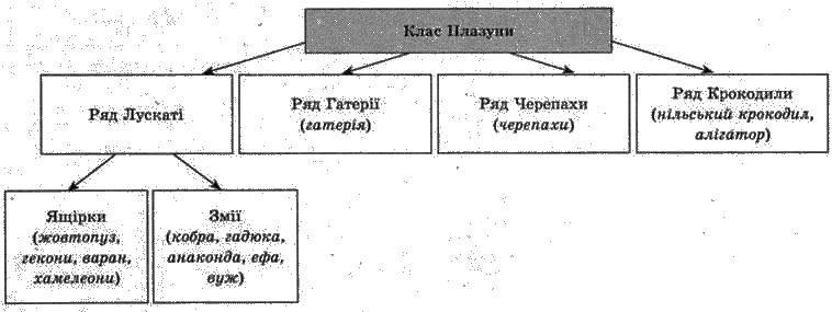 Клас Плазуни, або Рептилії   Тип Хордові   Підцарство Багатоклітинні