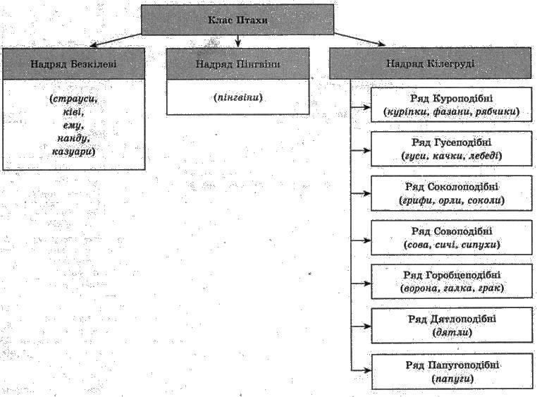 Клас Птахи   Тип Хордові   Підцарство Багатоклітинні
