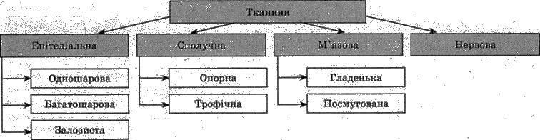 Тканини   ОРГАНІЗМ ЛЮДИНИ ЯК БІОЛОГІЧНА СИСТЕМА   БІОЛОГІЯ ЛЮДИНИ