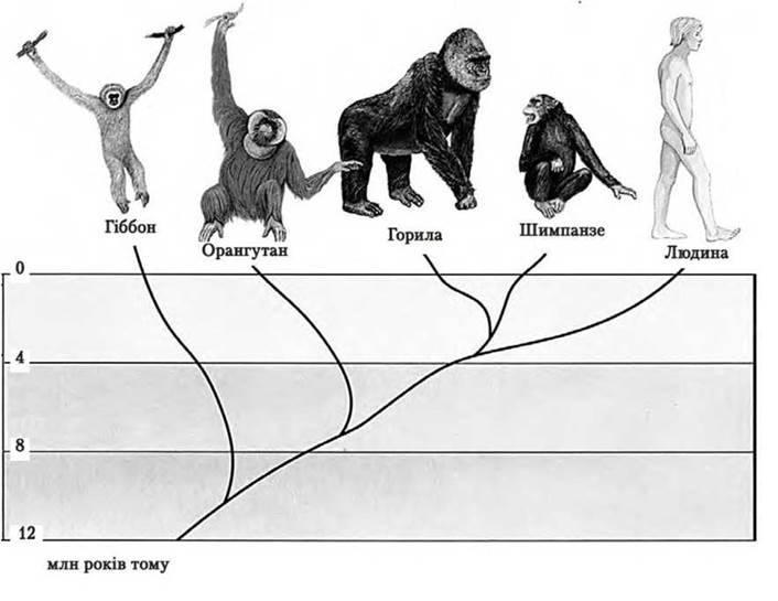 Історичний розвиток органічного світу