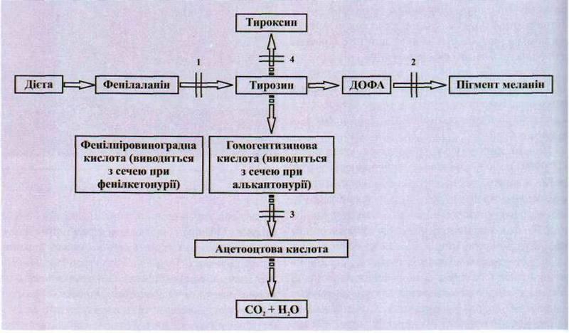 Класифікація молекулярних порушень обміну речовин   Генні (молекулярні) хвороби
