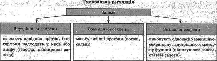 Гуморальна регуляція. Залози внутрішньої секреції   РЕГУЛЯЦІЯ ФУНКЦІЙ   БІОЛОГІЯ ЛЮДИНИ