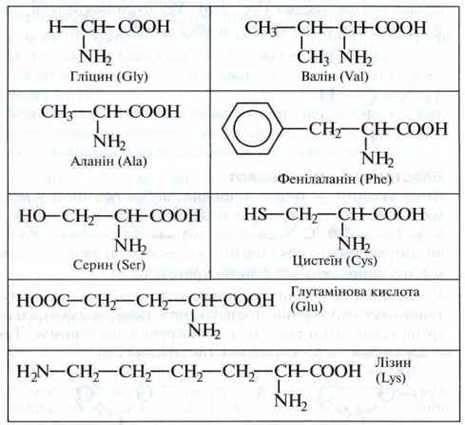 Властивості амінокислот   Амінокислоти   Протеїни (білки)