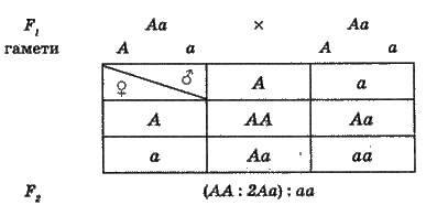 Основні закономірності спадковості   ГЕНЕТИКА