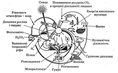 Взаємозвязки основних компонентів екосистеми