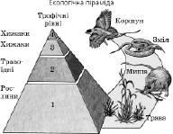 Організми та їх угруповання   Основи екології   Розмноження та індивідуальний розвиток організмів