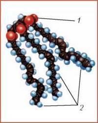 Організм людини як біологічна система. Хімічний склад організму людини