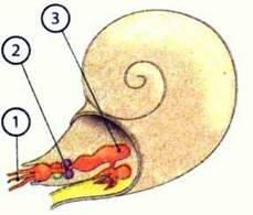 Органи та системи органів