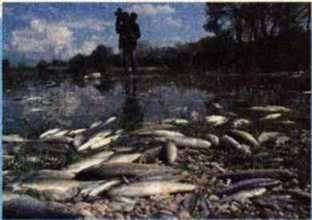 Забруднення, його вплив на компоненти природи й живі організми. Джерела антропогенного забруднення навколишнього середовища