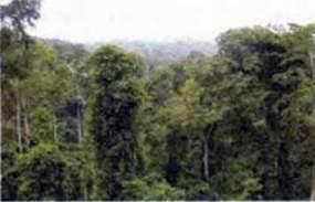 Природні зони Африки. Вологі екваторіальні ліси