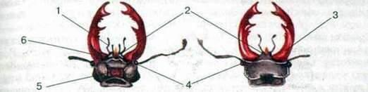 Клас Комахи. Будова тіла і системи органів