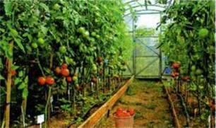 Територіальна спеціалізація сільського господарства. Аграрні реформи, їхнє соціальне і економічне значення