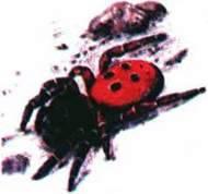 Клас Павукоподібні