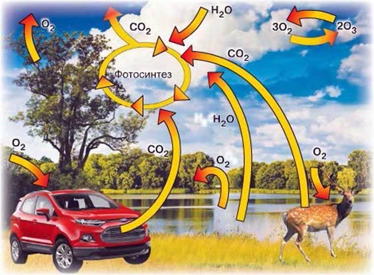 Колообіг Оксигену в природі. Застосування кисню та його біологічна роль