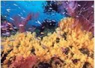 Частини Світового океану. Суходіл в океані