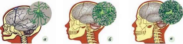Онтогенез людини. Роль ендокринної системи в регуляції онтогенезу