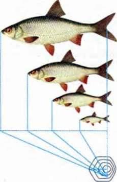 Клас Променепері риби