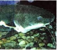 Розмноження кісткових риб. Поведінка та сезонні явища у житті риб