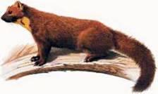 Твір опис тварини в художньому і науковому стилях
