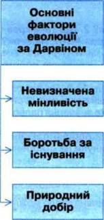 ОСНОВНІ ПОЛОЖЕННЯ ЕВОЛЮЦІЙНОЇ ГІПОТЕЗИ Ч. ДАРВІНА