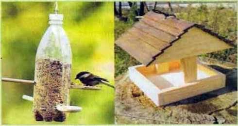 Пристосування організмів до періодичних змін умов середовища