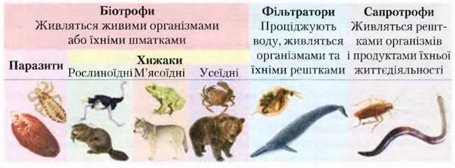 Живлення тварин
