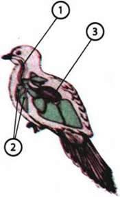 Особливості життєдіяльності птахів