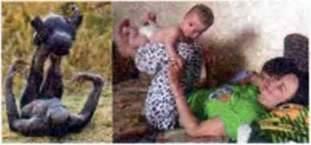 Батьківська поведінка